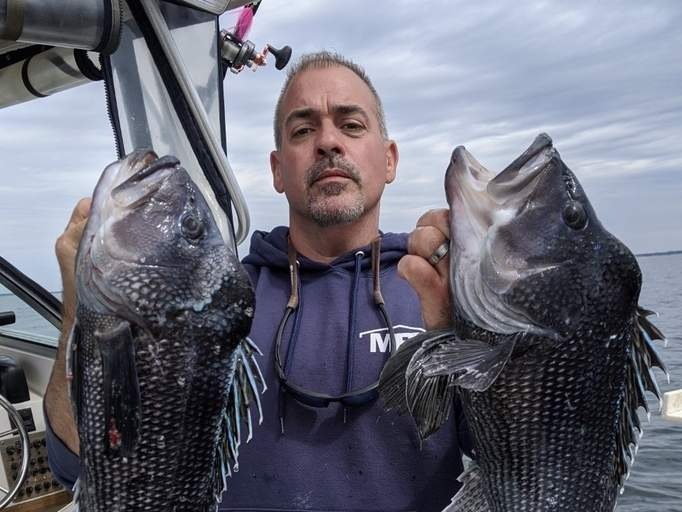 Ed Rubino of Guilford shows just how good the Long Island Sound black sea bass fishing has been this season. Photo courtesy of Captain Morgan