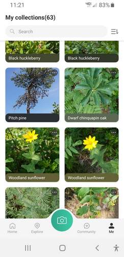 Picture This, an app, is based on artificial intelligence and works on both the Apple and Android platforms. It is about 80 percent accurate, far more than other plant identification apps I've tried. Screenshot courtesy of Kathy Connolly