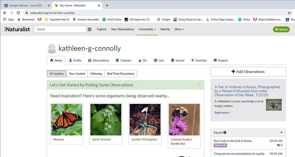iNaturalist is one of the most widely used crowd-sourced nature projects on the internet.  Screenshot courtesy of Kathy Connolly