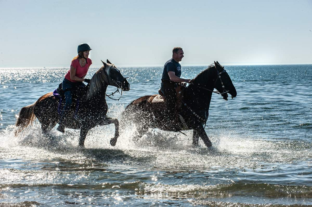 Sunday November 8th, 2020 Hammonaset Beach, Madison:  Kelly and Steve Mastri ride Bailey and Jack through the surf. Jack is a Tennesse walker and Bailey is a Rocky Mountain Horse.     Photo by Susan Lambert/The Source