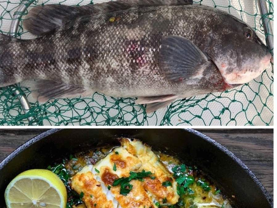 From being hooked to being cooked, fresh caught Long Island Sound tautog make for a delicious meal. Photo illustration courtesy of Captain Morgan