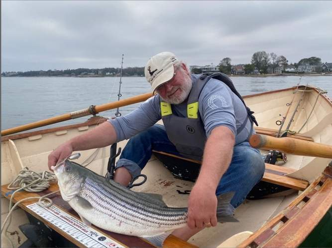This nice slot limit striped bass fell to a topwater popper and released by Michael McNiff of Guilford while fishing from his homemade dory. Photo courtesy of Captain Morgan